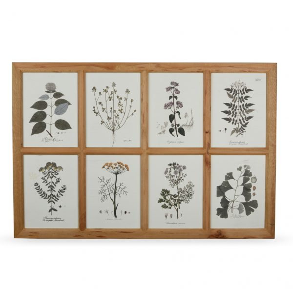 Wall Art: Handcrafted, frame of botanical drawings